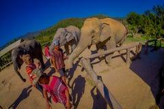 清莱,泰国- 2018年2月01日:美好的室外观点的接近一头巨大的大象的未认出的人 库存照片