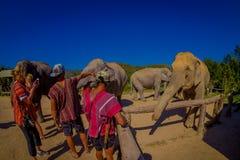 清莱,泰国- 2018年2月01日:美好的室外观点的接近一头巨大的大象的未认出的人 图库摄影