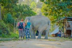 清莱,泰国- 2018年2月01日:走接近在的一头年轻大象的夫妇的惊人的室外看法 免版税库存照片