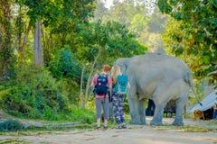 清莱,泰国- 2018年2月01日:走接近在的一头年轻大象的夫妇的惊人的室外看法 库存照片