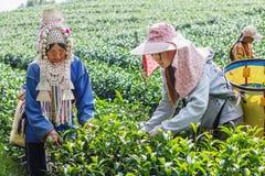 清莱,泰国- 2015年12月31日:从泰国的妇女 免版税库存照片