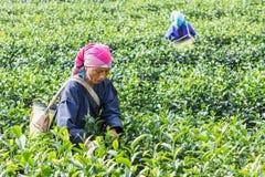 清莱,泰国- 2015年12月31日:从泰国的妇女 免版税库存图片