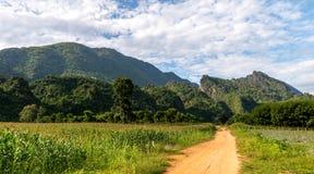 清莱,米领域泰国, 2015年11月 免版税库存图片