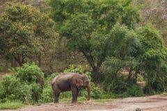清迈,泰国大象训练营大象展示 免版税库存图片