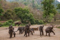 清迈,泰国大象训练营大象展示 免版税库存照片