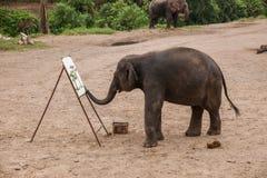 清迈,泰国大象训练营大象展示 图库摄影