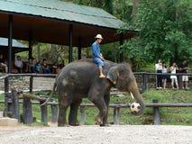 清迈,泰国_ 6日2017年:每日大象展示-大象踢橄榄球在Maesa大象阵营,清迈, Thaila 库存照片