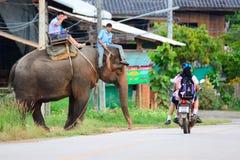 清迈,泰国- 2015年11月13日:大象和mahouts,当护航游人乘坐大象时 库存图片
