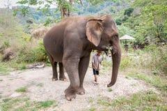 清迈,泰国4月13日2018年:亚洲大象吃计划 库存照片