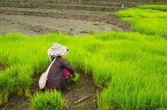 清迈, 2015年7月23日的泰国 村民帮助 图库摄影