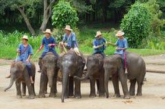 清迈2014年9月11日:大象显示技巧对观众 免版税库存照片