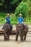 清迈2014年9月11日:大象显示技巧对观众 库存图片