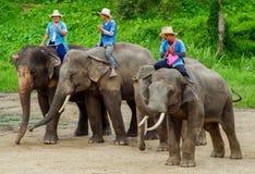清迈2014年9月11日:大象显示技巧对观众 免版税图库摄影