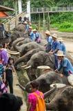清迈2014年9月11日:大象显示技巧对观众 免版税库存图片