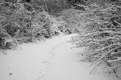 清除在有雪脚印的森林 库存图片