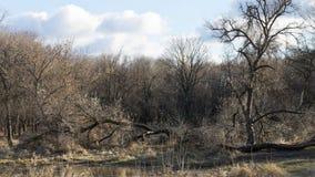 清除在森林在12月的风暴以后 库存图片
