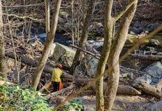 清除足迹一棵下落的杉树- 2 库存图片