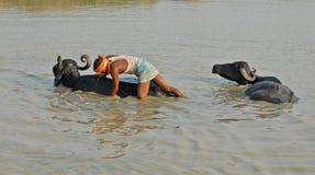 清洗印度 库存图片