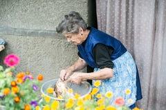 清洗和洗涤新近地被屠杀的鸡的资深妇女 图库摄影