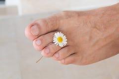 清洗在拿着在手指之间的轻的背景的右男性脚一朵小雏菊 医疗修脚概念 库存照片