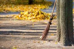清洗在秋天公园 免版税库存照片