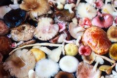 清洗在水碗的五颜六色的蘑菇 免版税库存照片