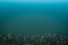 清洗大海,海杂草 免版税库存图片