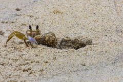 清洗它的房子的小的螃蟹 免版税库存照片