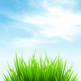 清洗春天惊人的风景 也corel凹道例证向量 免版税图库摄影