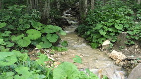 清洗森林小河的淡水 影视素材