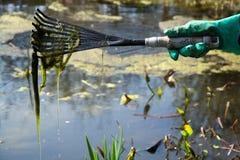 清洗池塘 图库摄影