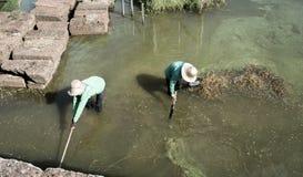 清洗池塘 库存照片