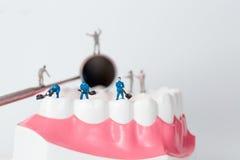 清洗牙模型的人们 免版税库存图片