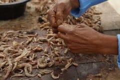 清洗的新鲜的虾 免版税图库摄影