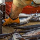 清洁鱼 库存图片