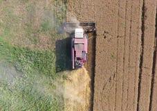 清洁麦子收割机 顶视图 库存图片