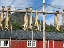 渔业储备 库存照片