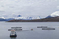 渔场在挪威 免版税库存图片