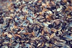 渔夫充分` s海滩不同的五颜六色的贝壳 免版税库存照片