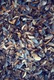 渔夫充分` s海滩不同的五颜六色的贝壳 免版税库存图片