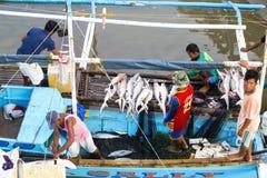 渔夫切除了飞翅鲨鱼 免版税图库摄影