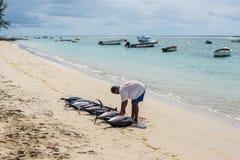 渔夫和九条大金枪鱼 免版税图库摄影