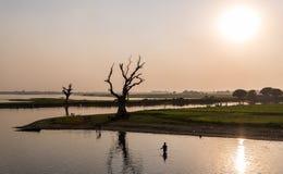 渔夫和树剪影, Amarapura,缅甸 图库摄影