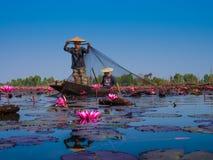渔夫和红色莲花 库存图片