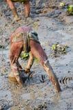 渔夫在一张泥泞的池塘股票照片钓鱼 免版税库存图片