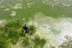 渔夫在湖抓一条鱼 库存照片