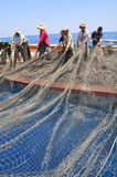 渔夫在芽庄市海湾的海收集拖网抓的金枪鱼 库存照片