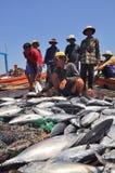 渔夫在芽庄市海湾的海收集拖网抓的金枪鱼 免版税图库摄影