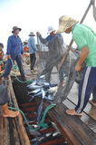 渔夫在芽庄市海湾的海收集拖网抓的金枪鱼 库存图片