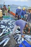 渔夫在芽庄市海湾的海收集拖网抓的金枪鱼 免版税库存照片